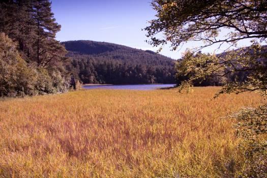 Land Field Landscape #105411