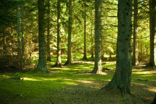 Pathway Forest Landscape Free Photo