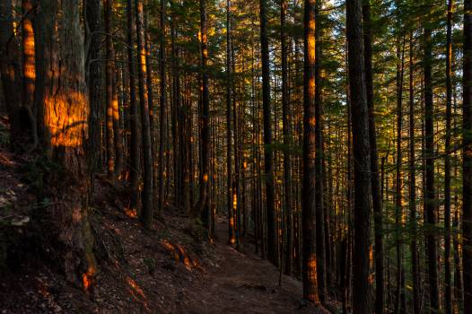 Forest Tree Landscape #10569