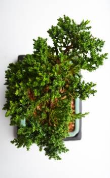 Tree Plant Leaf #105863