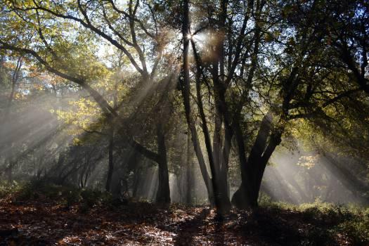 Tree Landscape Forest #10611
