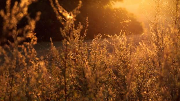 Sky Landscape Grass #10612