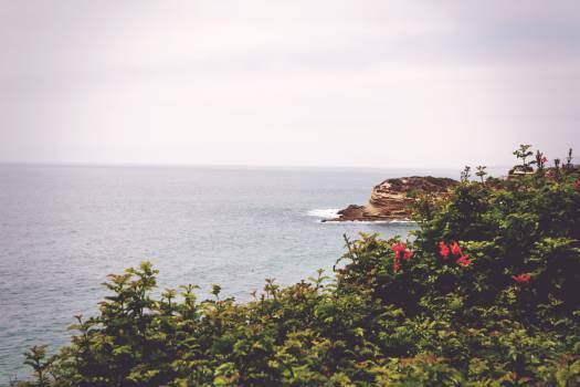 Shore Beach Sea #10613