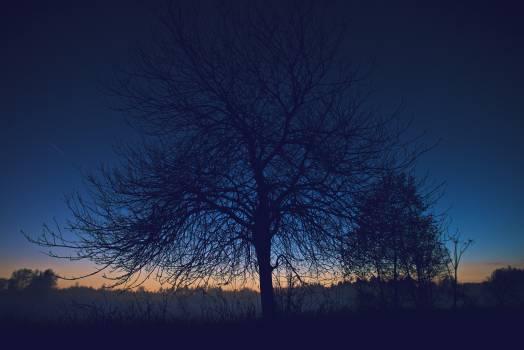 Tree Sky Landscape #106396