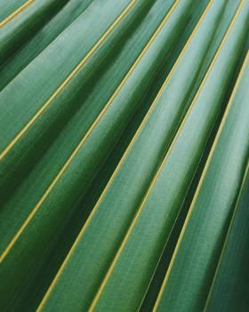 Leaf Plant Futuristic #10639