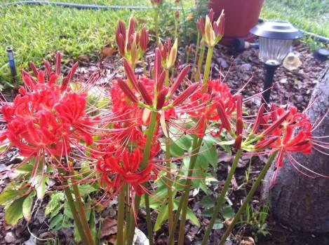 Woody plant Shrub Vascular plant #106442