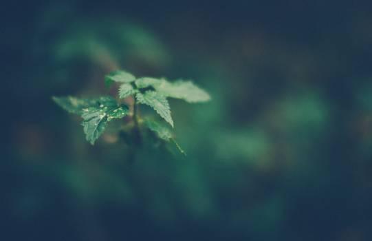 Herb Plant Vascular plant #106489