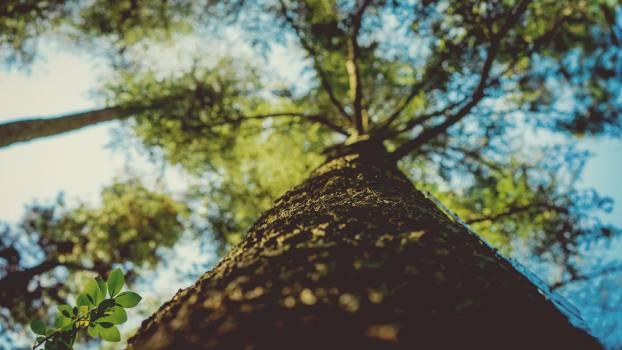 Tree Oak Landscape #10682