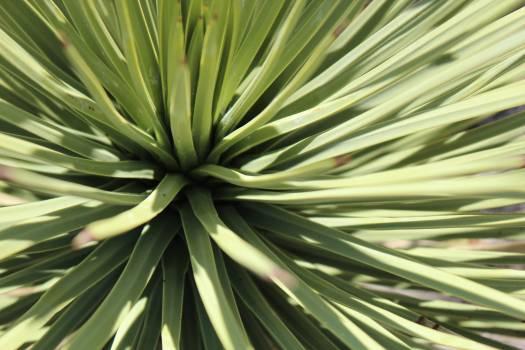 Leaf Plant part Palm Free Photo