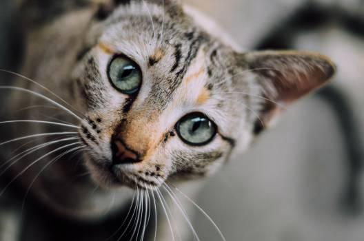 Cat Feline Fur #10765