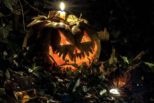 Pumpkin Jack-o'-lantern Lantern Free Photo