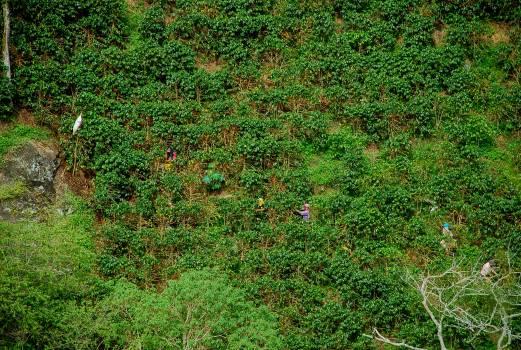 Plant Vascular plant Grass #107840