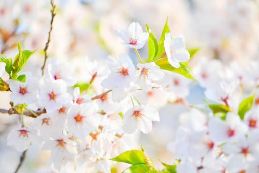 April Flower Spring #10785