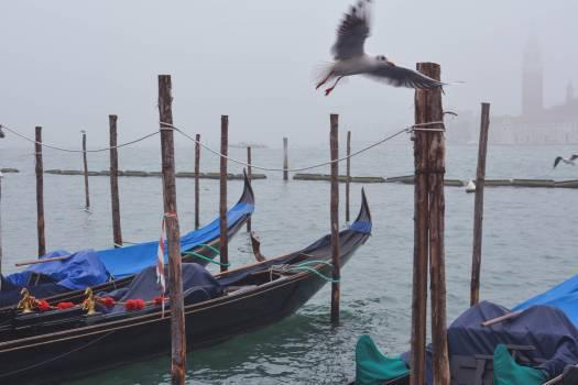 Boat Gondola Vessel Free Photo