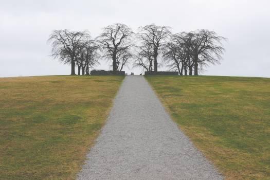 Road Way Landscape #10842