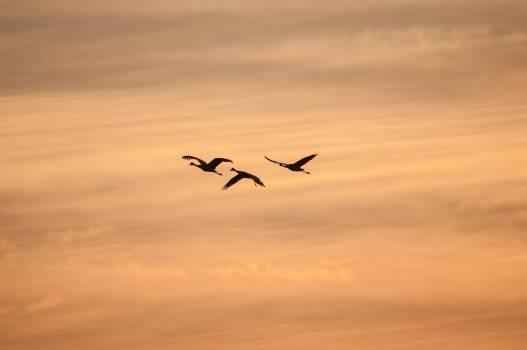Sky Aircraft Dune #10845