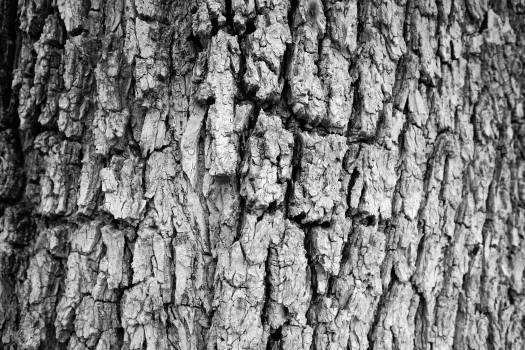 Texture Bark Old Free Photo