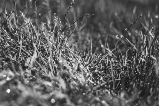 Grass Plant Field #10861