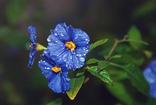 Flower Plant Herb #108658