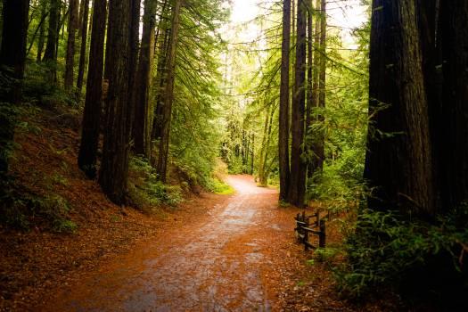 Forest Landscape Tree Free Photo