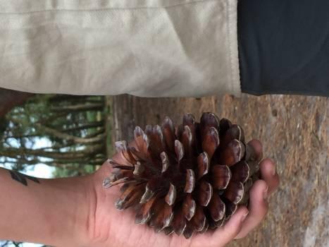 Seed Brown Food Free Photo