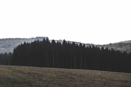 Landscape Sky Grass #10915