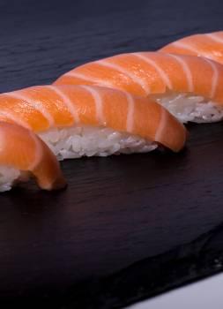 Conch Gastropod Mollusk Free Photo