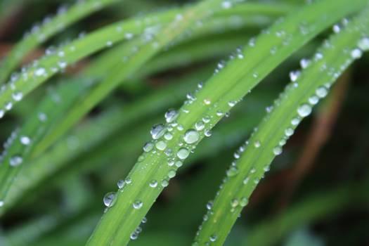 Drop Leaf Rain #10956