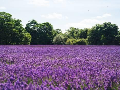 Purple Flower Flowers #10959