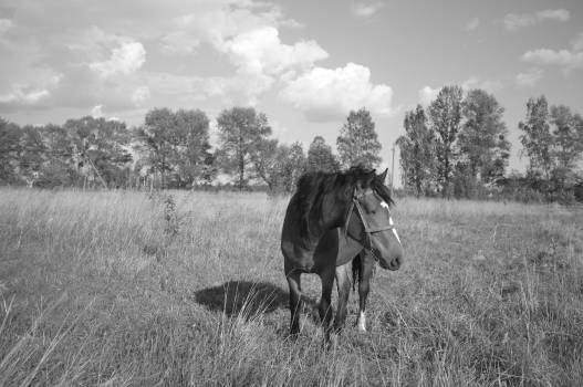 Horse Animal Horses Free Photo