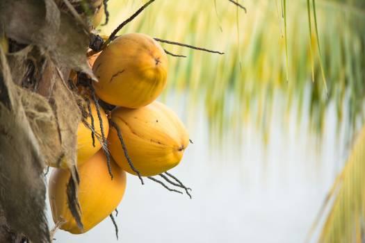 Fruit Edible fruit Tree #110001