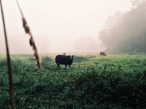 Bison Bovid Ruminant #110137