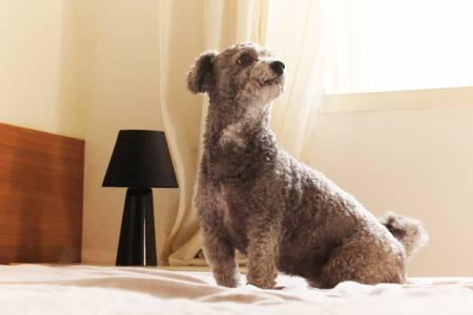 Terrier Dog Hunting dog #110161
