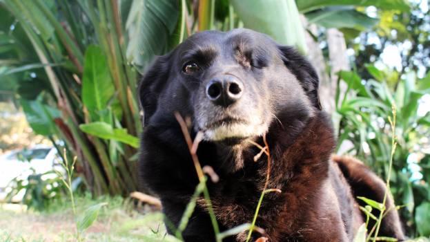 Gordon setter Setter Dog #110162