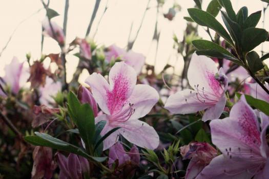 Pink Flower Flowers #110166