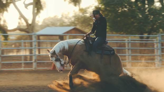 Cowboy Horse Laborer Free Photo