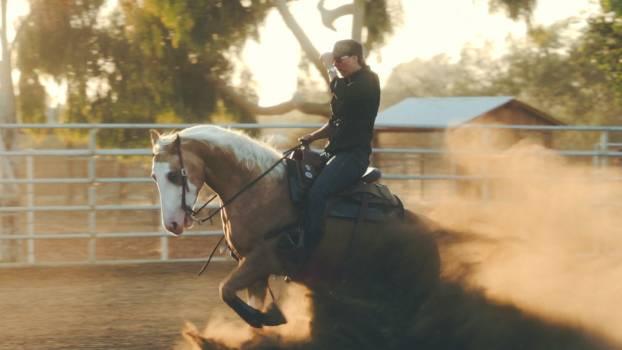 Cowboy Laborer Horse Free Photo