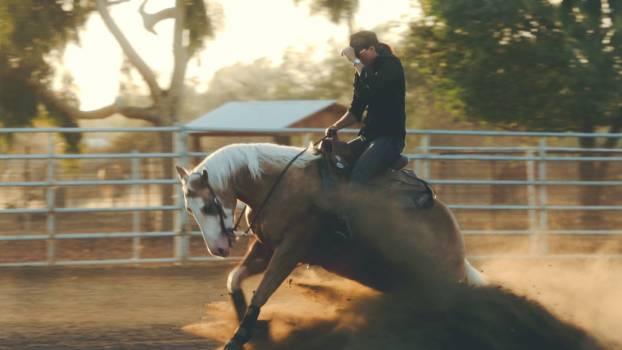 Horse Cowboy Animal Free Photo