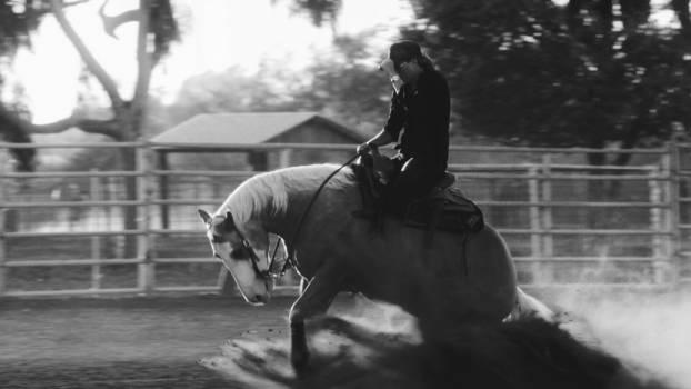 Horse Animal Thoroughbred Free Photo