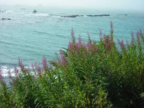 Vascular plant Water Landscape #110452