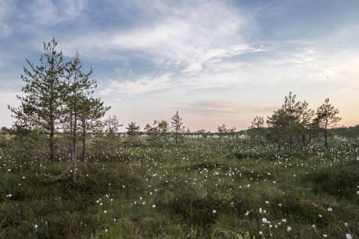 Landscape Tree Sky #11048