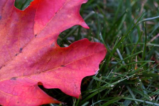 Flower Vine Plant Free Photo