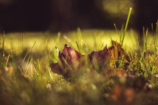 Plant Leaf Garden #11058