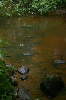 Platypus Turtle Terrapin Free Photo