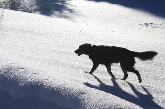 Retriever Groenendael Dog #110731