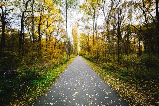 Asphalt Road Landscape #11088