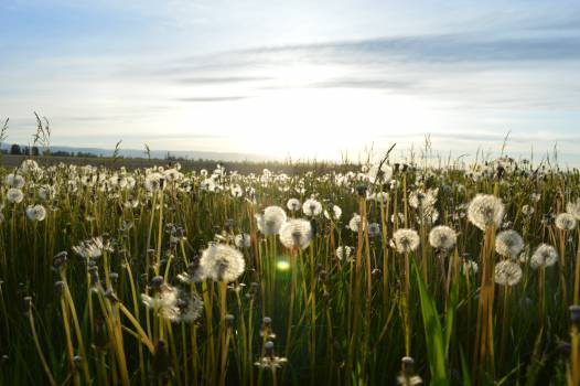 Field Grass Landscape #11099