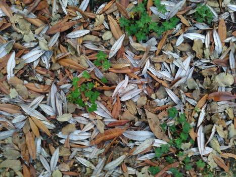 Tea Leaf Leaves #111218