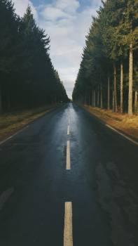 Way Road Landscape #111229