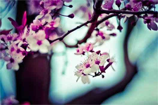 Flower Pink Petal #11122